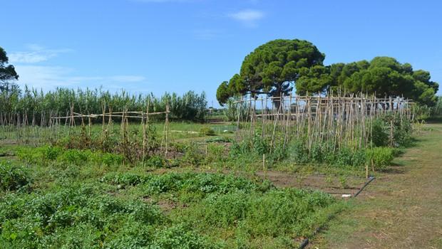 7 cultivos perfectos para tu primer huerto