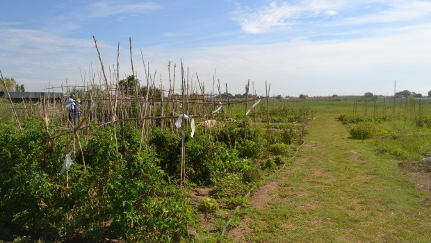 La fertilización de las plantas