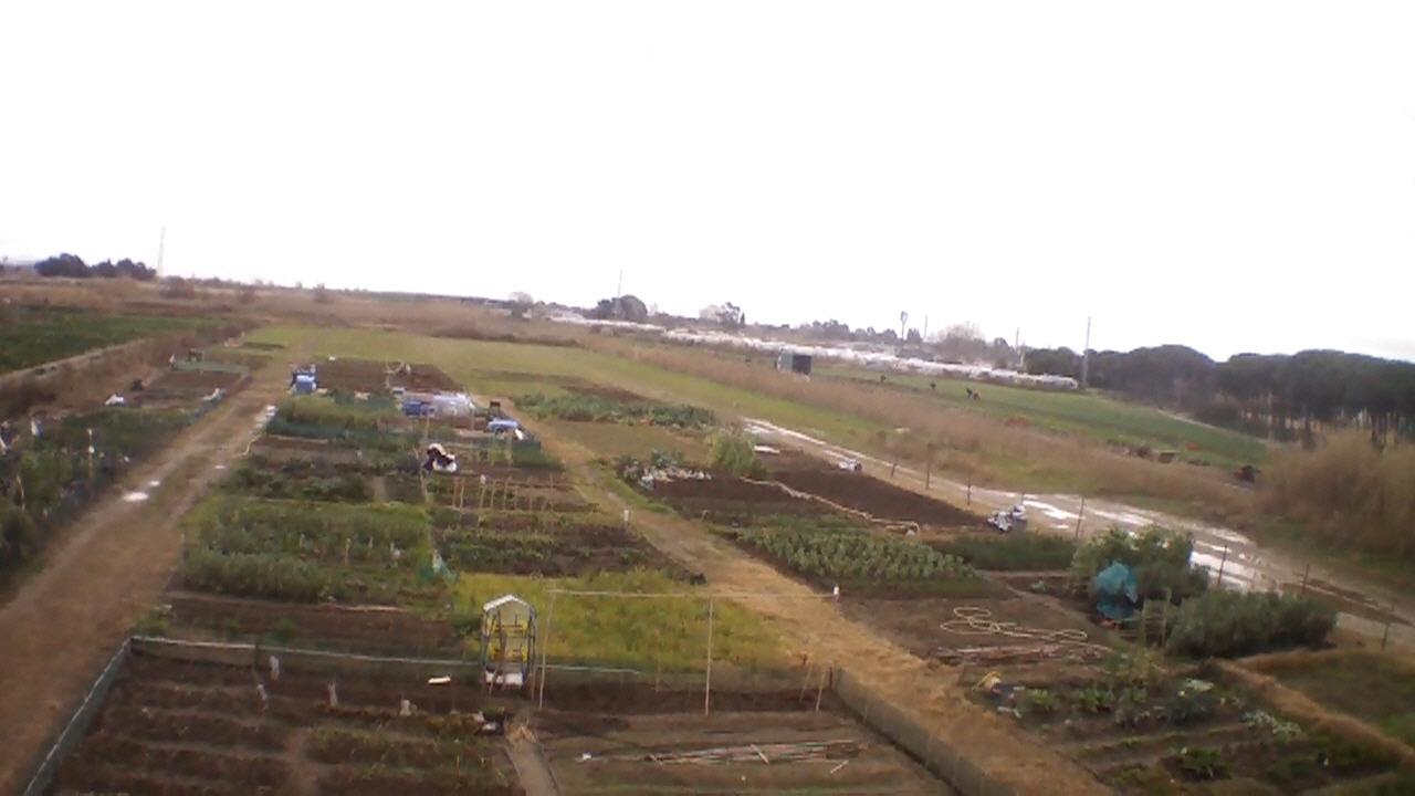 7 cultivos para tu primer huerto