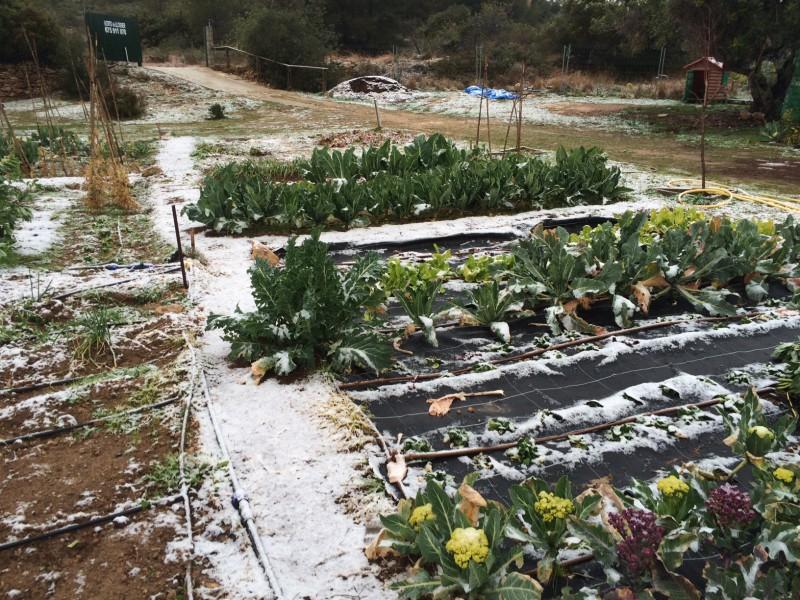 huerto roda de bara nevado11