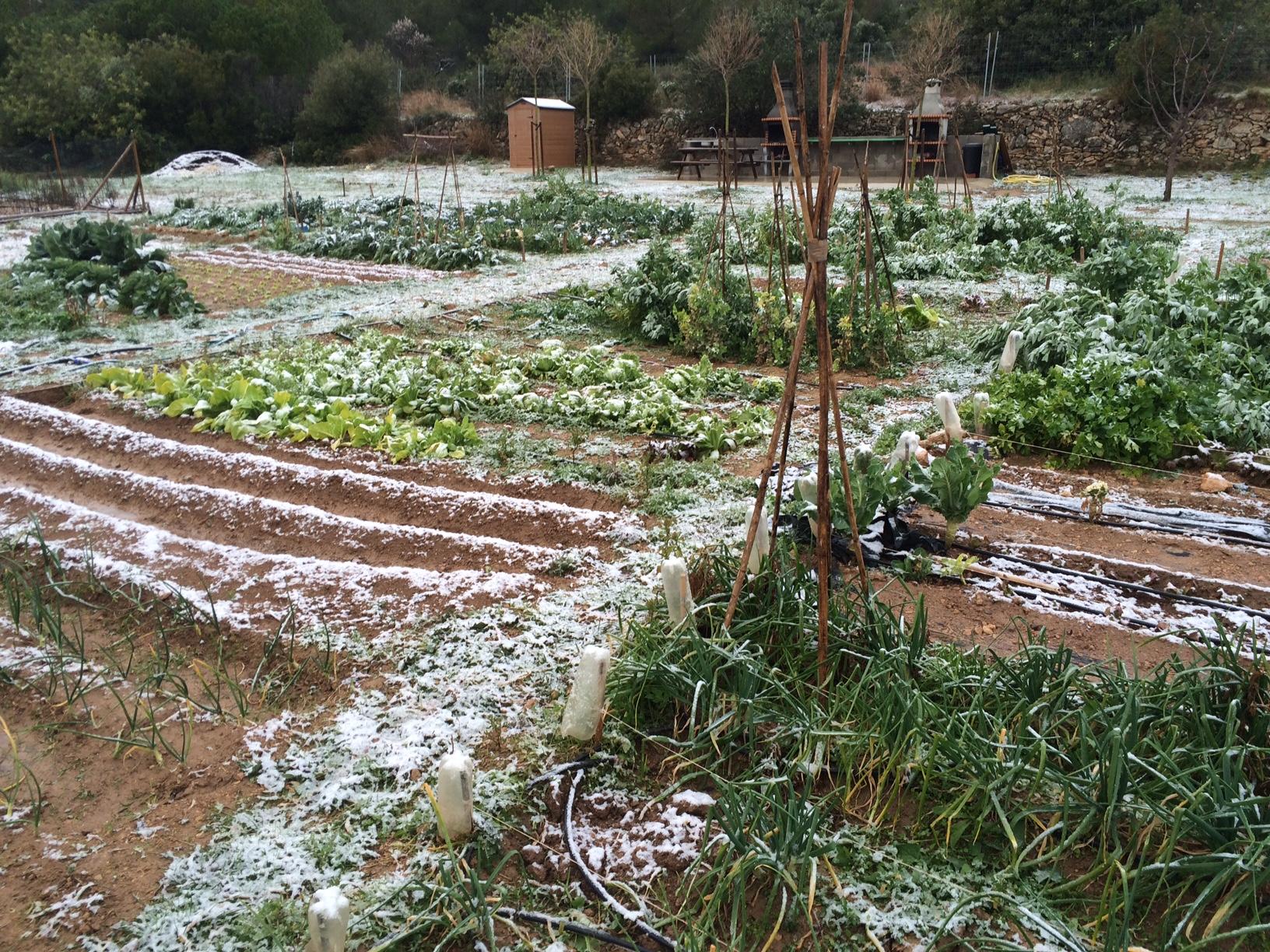 Hoy en los huertos de Roda de Bara ha nevado!!!!!