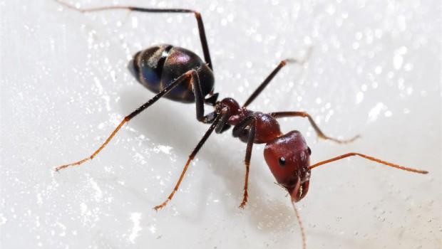 Repelentes de insectos no dañinos ni tóxicos