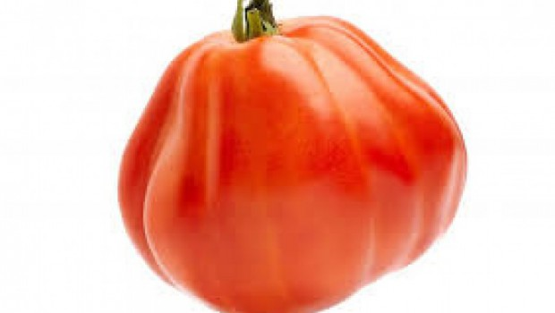Cultivando tomate Cor de Bou
