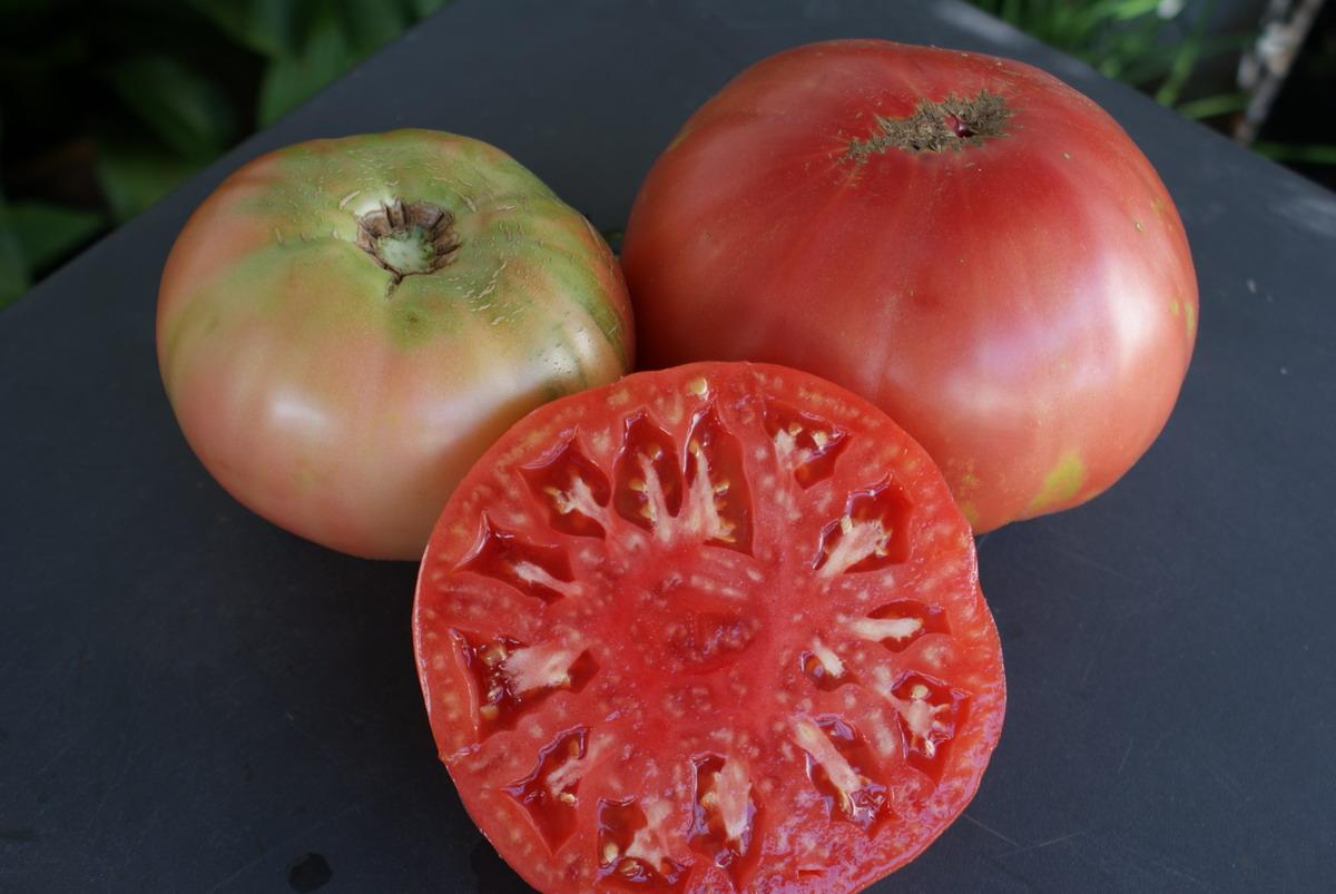 Cómo tener nuevas plantas de tomate en 15 días