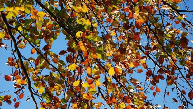 El huerto en octubre
